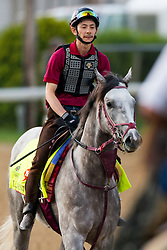 Derby 142 hopeful Lani with Eishu Maruuchi up were on the track for training, Monday, May 02, 2016 at Churchill Downs in Louisville.