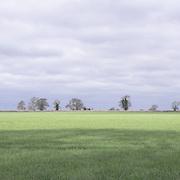 Field, Cotswolds