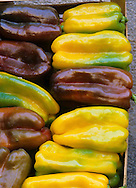 Purple and Yellow bell pepper