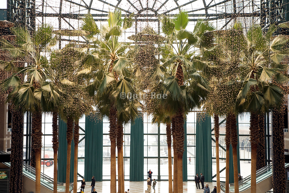 palm tree tops in the atrium at the World Financial center in New York City