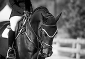 2016 Tbird - FEI Longines WC Aug 26-28