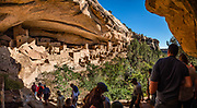 Cliff Palace, the largest cliff dwelling in North America, was built 1190-1260 CE by Ancestral Puebloans on Chapin Mesa, in what is now Mesa Verde National Park, in Colorado, Southwestern USA. Cliff Palace was rediscovered in 1888 by Richard Wetherill and Charlie Mason while looking for stray cattle. Mesa Verde National Park is a UNESCO World Heritage Site in Montezuma County. The park was established by Congress and President Theodore Roosevelt in 1906 near the Four Corners region. Starting around 7500 BCE, Mesa Verde was seasonally inhabited by nomadic Paleo-Indians. Later, Archaic people established semi-permanent rockshelters in and around the mesa. By 1000 BCE, the Basketmaker culture emerged from the local Archaic population, and by 750 CE the Ancestral Puebloans had developed from the Basketmaker culture. The Mesa Verdeans survived using a combination of hunting, gathering, and subsistence farming of crops such as corn, beans, and squash. They built the mesa's first pueblos sometime after 650, and by the end of the 1100s began building massive cliff dwellings. By 1285, following a period of social and environmental instability driven by a series of severe and prolonged droughts, they abandoned the area and moved south into what is today Arizona and New Mexico. This image was stitched from multiple overlapping photos.