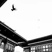 Monastery birds in Bhutan.