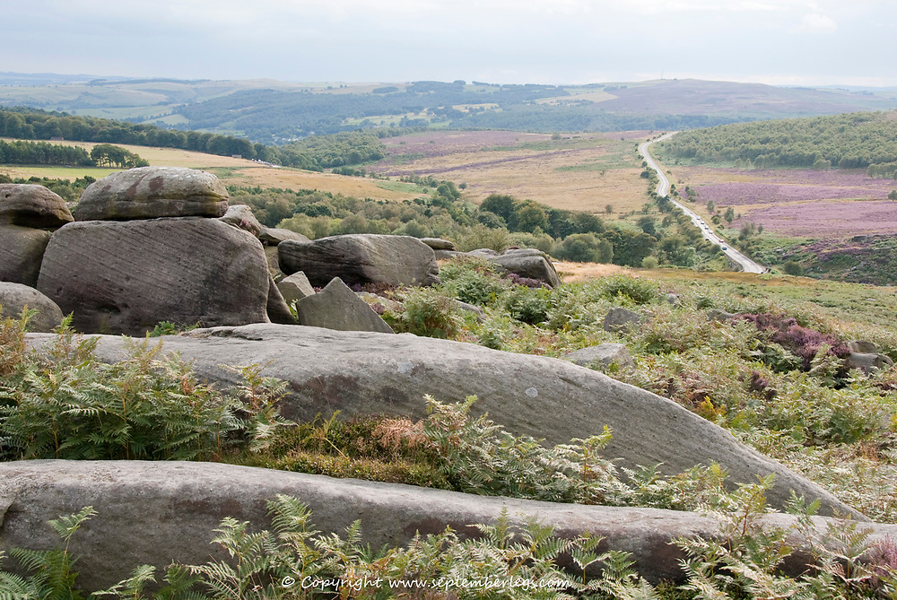Derbyshire, UK - Aug 2015: A rocky green landscape gives way to pink heathers in the valley on 24 Aug in Hathersage Moor, Peak District