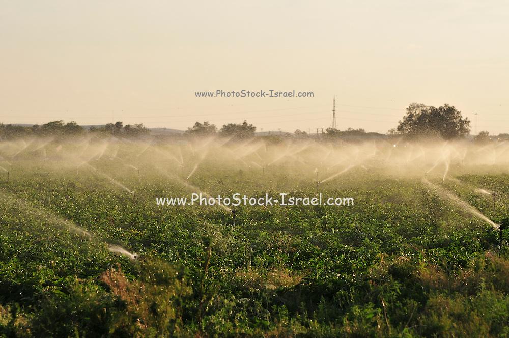 Israel, Negev Desert, field irrigation with sprinklers a wasteful watering method