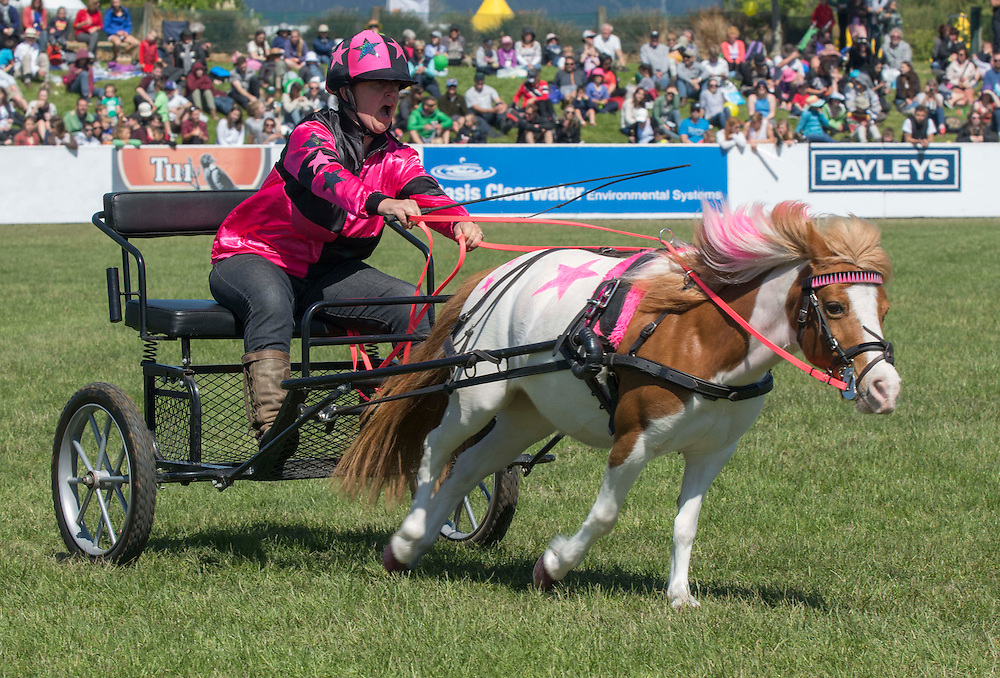 Cherrie Stalker drives Molly in the Zilco Scurry racing event at the Canterbury A&amp;P Show, Christchurch, New Zealand, Friday, 13 November, 2015.<br /> Credit:SNPA / David Alexander