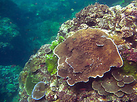Beautiful coral landscape situated off the coast of Bali, Indonesia. Various coral forms are set against the aquamarine background of the sea.