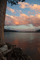 """Donner Lake Sunset 7"" - Photograph at sunset of a tree and it's roots at Donner Lake in Truckee, California."