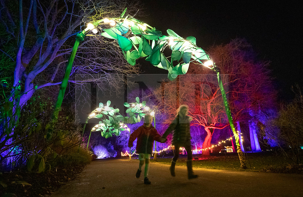 © Licensed to London News Pictures. 30/11/2018. London, UK. Children run under a canopy of mistletoe and lanterns at RHS Wisley Gardens. Trees and plants have been illuminated at Royal Horticulture Society Wisley Gardens for the Christmas Glow seasonal event. Hundreds of different lights can be seen when following the trail throughout the gardens opening 1 December 2018 2 January 2019. Photo credit: Peter Macdiarmid/LNP