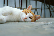 cat lying on floor