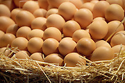brown eggs in a basket with straw