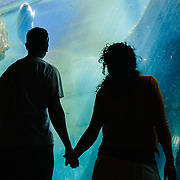 Heather and Jay Goodrich hold hands while viewing the seal tank from below ground at the Seward Sealife Center.