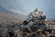 Molten lava that has hardened is often referred to as frozen lava rock. This image was captured in a frozen lava crater, part of the Kilauea Iki Trail, in Hawaii Volcanoes National Park.