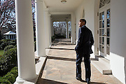 02.APRIL.2013. WASHINGTON D.C.<br /> <br /> PRESIDENT BARACK OBAMA LOOKS OUT OVER THE ROSE GARDEN AS HE WALKS ALONG THE COLONNADE OF THE WHITE HOUSE<br /> <br /> BYLINE: EDBIMAGEARCHIVE.CO.UK<br /> <br /> *THIS IMAGE IS STRICTLY FOR UK NEWSPAPERS AND MAGAZINES ONLY*<br /> *FOR WORLD WIDE SALES AND WEB USE PLEASE CONTACT EDBIMAGEARCHIVE - 0208 954 5968*