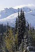 Snow, Ice, Winter, Aspen tree, Spruce tree, Fall, Autumn, Denali National Park, Alaska