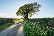"""Stop, Look, Listen"" Anglesey lane<br />