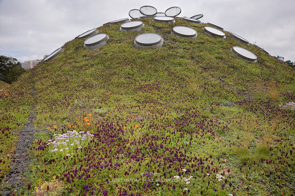 The Living Roof of the California Academy of Sciences building within Golden Gate Park, and adjacent to the De Young Museum.  The roof provides stormwater management for both flow reduction and water quality.  The living roof contains over 40 native California plant species and provides habitat for a wide variety of wildlife, particularly butterflies.  The rooftop's seven undulating green hillocks pay homage to the iconic topography of San Francisco and blurs the boundary between building and parkland.  Living roofs significantly reduce Heat Island Effect, and the vent windows help manage interior climate.