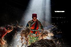 November 1, 2018 - Dhaka, Bangladesh - Workers work in a jute processing mill while sunrays enter through the rooftop in Narayanganj near Dhaka, Bangladesh.  (Credit Image: © Mushfiqul Alam/NurPhoto via ZUMA Press)