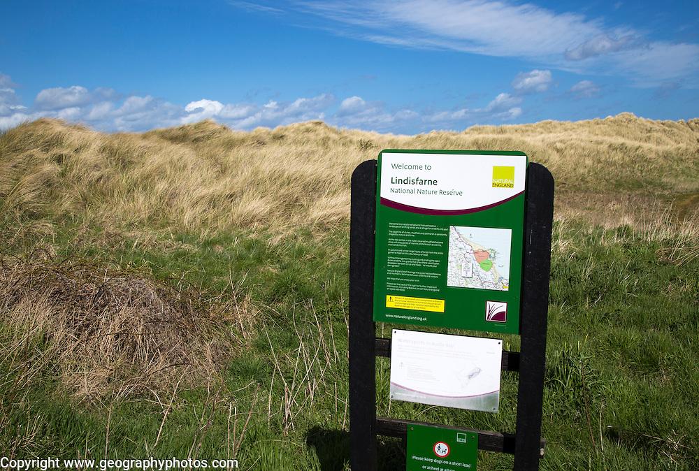 Sand dunes in Lindisfarne national nature reserve, Budle Bay, Northumberland coast, England, UK
