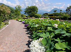 Walk lined with pink water lillies and hydrangas add grace to Villa Taranto Botanical Gardens (Giardini Botanici Villa Taranto) in the town of Pallanza on the western shore of Lake Maggiore. The gardens were established 1931-1940 by Scotsman Neil Boyd McEacharn who bought an existing villa and its neighboring estates, cut down more than 2000 trees, and undertook substantial changes to the landscape, including the addition of major water features employing 8 km of pipes. Today the gardens contain nearly 20,000 plant varieties representing more than 3,000 species, set among 7 km of paths. Among its collections are azalea, cornus, greenhouses of Victoria amazonica, and 300 types of dahlias.mausoleum.
