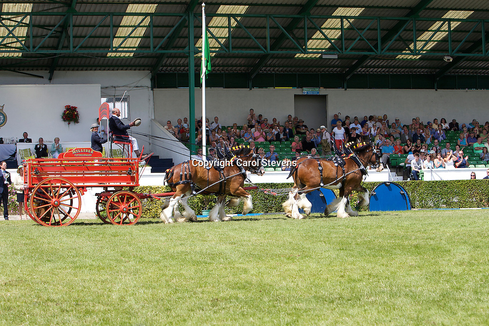 Great Yorkshire Show 2011    Heavy Horse Team Turnouts
