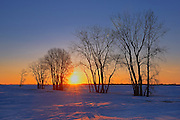 Sun rising over the prairie landscape through trees<br /> Grande Pointe<br /> Manitoba<br /> Canada