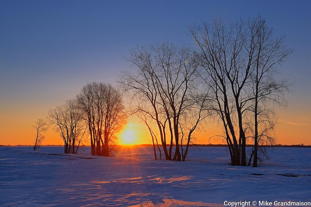Sun rising over the prairie landscape through trees<br /> Grande Pointe<br /> Manitoba<br /> Canada
