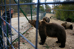 ROMANIA ZARNESTI 25OCT12 - Victor Watkins, Wildlife Advisor for the World Society for the Protection of Animals observes Eurasian brown bears at the Zarnesti Bear Sanctuary in Romania, funded by WSPA.......With over 160 acres (70 hectares) spread over a wooded hillside, it is Romania's first bear sanctuary and today houses 67 bears rescued from ramshackle zoos and cages at roadside restaurants.....jre/Photo by Jiri Rezac / WSPA....�© Jiri Rezac 2012