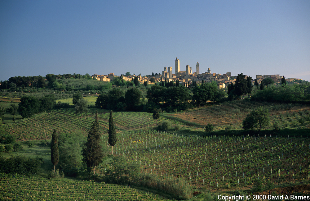 Vineyards around San Gimignano; Tuscany; Italy