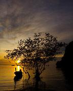 thailand, elephant,sunset,crab,monkey,boats,