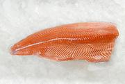 Fresh Salmon fillet on ice