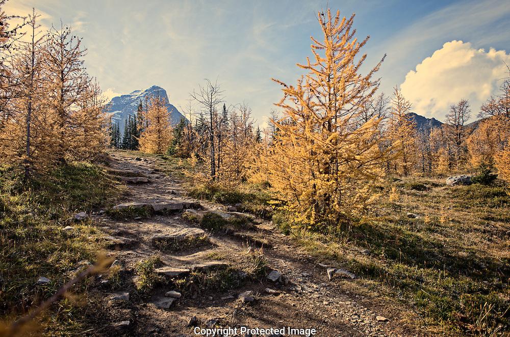 Haddo Peak from saddleback., Alberta, Canada, Isobel Springett
