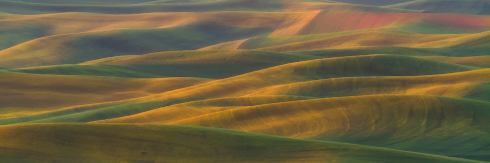 The first light of the day falls on the rolling green hills of The Palouse in Eastern Washington.
