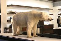 polar bear in shop window on saville row