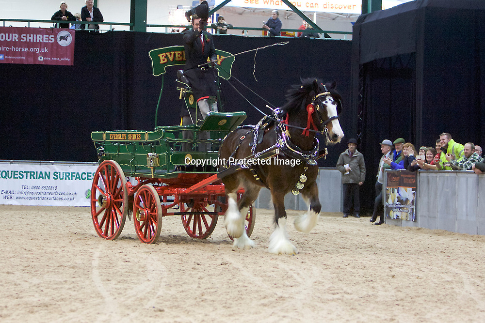 Ron Brewster driving Walton Bomber for Wendy Toomer-Harlow's Eversley Shires<br /> Winner of Overall Best Shod, Single Trade and Turnout Championship