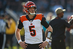 OAKLAND, CA - NOVEMBER 17: Quarterback Ryan Finley #5 of the Cincinnati Bengals stands on the field against the Oakland Raiders during the second quarter at RingCentral Coliseum on November 17, 2019 in Oakland, California. The Oakland Raiders defeated the Cincinnati Bengals 17-10. (Photo by Jason O. Watson/Getty Images) *** Local Caption *** Ryan Finley