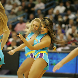 19 November 2008:  New Orleans Honeybee dancers perform during a NBA game between the Sacramento Kings and the New Orleans Hornets at at the New Orleans Arena in New Orleans, LA..