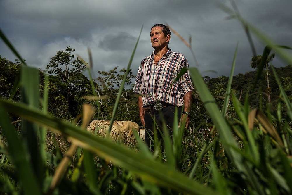 Freddy Rojas Torres poses for a portrait in a pasture at his dairy farm in San Rafael de Rio Cuarto de Grecia, Costa Rica. Mr. Rojas-Torres has filed dozens of complaints against a neighboring pineapple farm, becuase he says they are producing flies that make his cattle sitck.