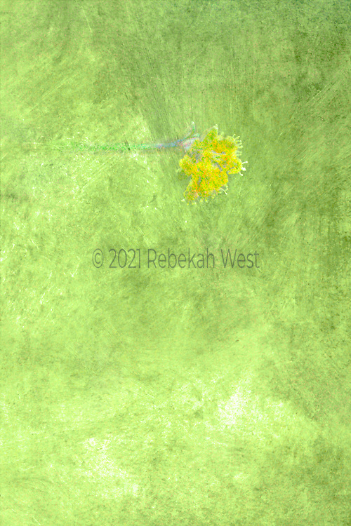 Stunning playful vertical field of bright soft green with a single horizontal stem of yellow flowers with white accents, greenery underlayers and overlayers, greenery, flower art, feminine, high resolution, licensing, iridescent, vertical, 3744 x 5616