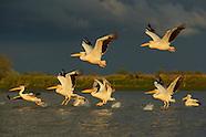 Rewilding Europe/Danube Delta, Romania