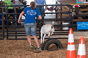 July  14, 2017.    <br /> Madison County Fair 2017.<br /> #MadisonCountyFairVA