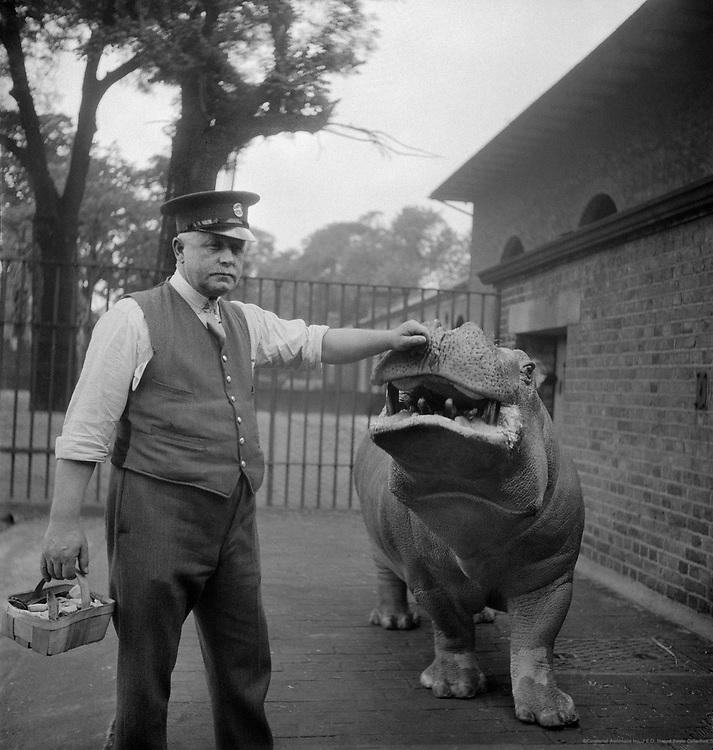 Zookeeper, Ernie Bowman and Hippopotamus, Joan, London, 1934