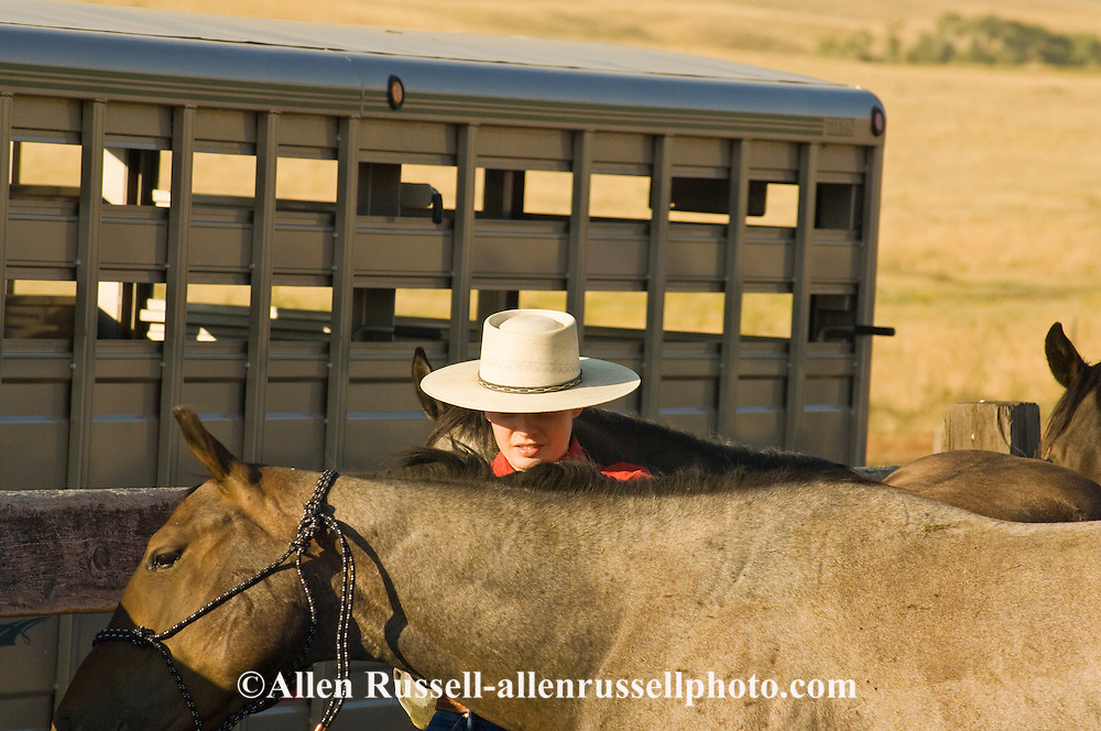 Montana cowgirl and horse trainer Elizabeth Parker prepares red roan Quarter Horse for Leachman Hairpin Cavvy horse sale, southeast of Billings Montana