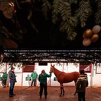 Arqana December Sale, Sunday 10/12/2017 photo: Zuzanna Lupa