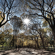 How Central Park can look in late October. Narrowing the lens aperture and shooting straight into the sun worked out well here I thought.