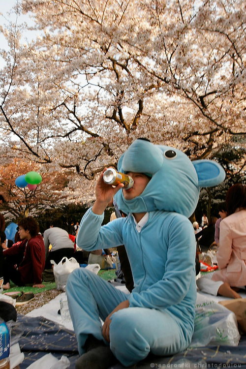 "The cherry trees blossom for a very short period, which could be as short as one week. The Japanese are celebrating their short-lived beauty by organizing ""hanami"" that is picnic parties at the parks under the cherry trees. Yoyogi park,Tokyo 9-April-2005, Japan"