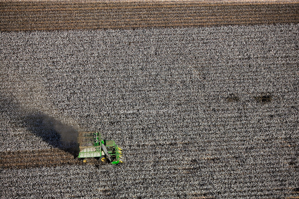 Tractor Plowing Cotton - Lines