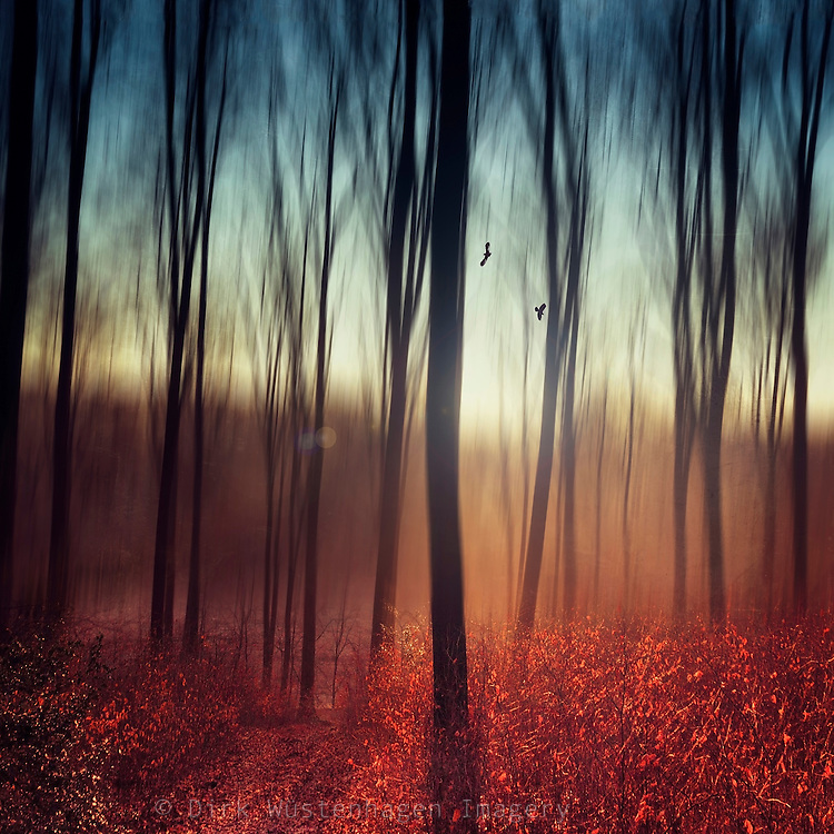 Abstraction of a forest at sunrise on a fall morning<br />