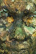 Gold leaf on a Buddha statue.