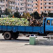 Dans Pyongyang, au pied du Monument du Parti des Travailleurs, passe un camion bondé de choux et de soldats.
